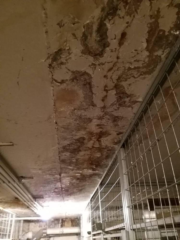 Schäden an Kellerdecke
